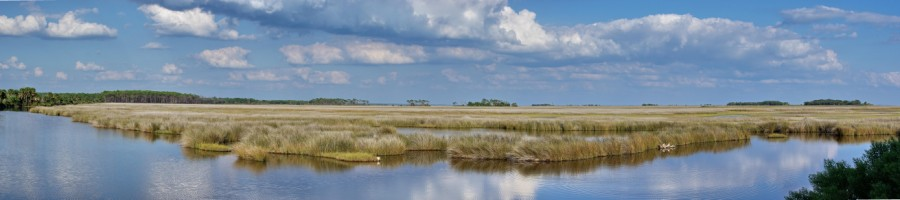 Tidal marsh viewed from the St. Marks Lighthouse area; photo by Mike Carlton